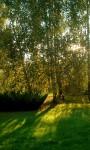 Furtka ogrodowa – wizytówka Twojego ogrodu