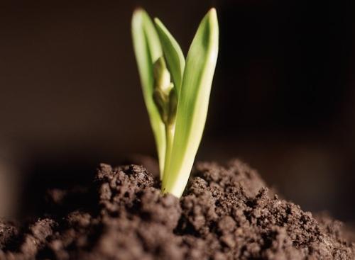Kilka porad dotyczących sadzenia roślin!