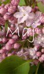 A po kwietniu przyszedł maj, a z majem…