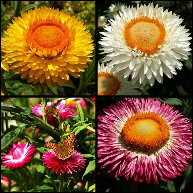 Top 5 jesiennych kwiatów