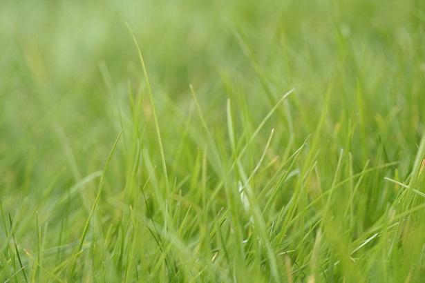 Nasiona traw – na co się zdecydować?