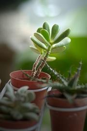 ochrona roślin