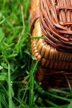 wiklina w ogrodzie