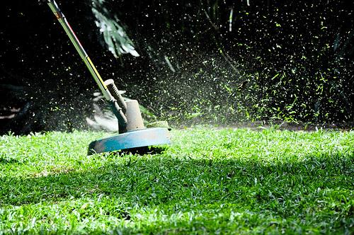 Jakie narzędzia są niezbędne w ogrodzie?