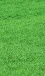 Na jaki trawnik się zdecydować?
