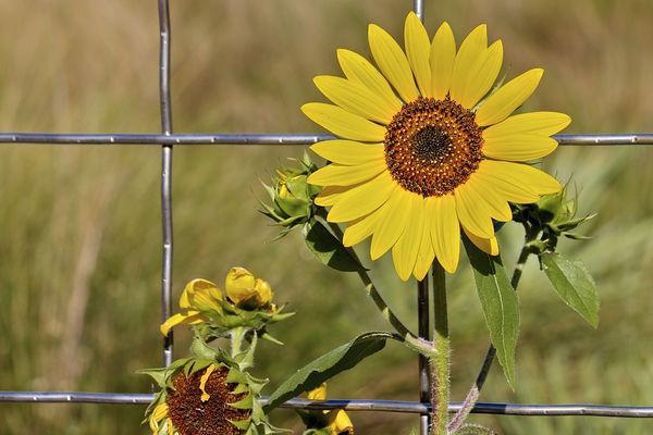 Siatka ogrodzeniowa – dlaczego warto?