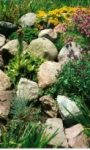 Budujemy ogródek skalny