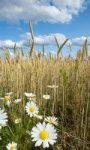 Ochrona roślin nie tylko w praktyce