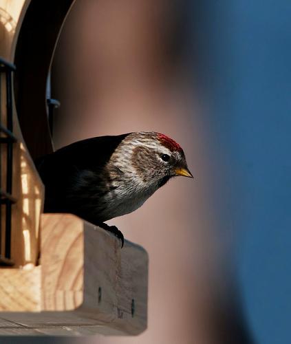 Czym dokarmiać ptaki?