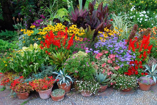 Survival roślin doniczkowych