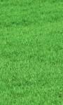 Jak pielęgnować trawnik po zimie?