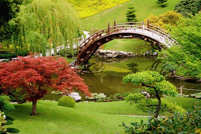 ogród z oczkiem wodnym