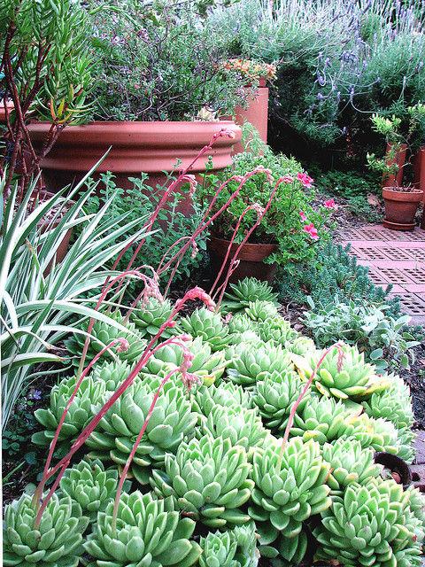 Ogród moich marzeń, czyli w krainie zieloności