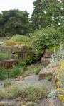 Rośliny do ogrodu skalnego