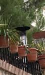 Balkon zielonym azylem