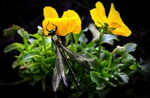 dragonfly-820378_1280