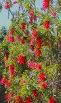 Nowoczesny ogród – czyli jaki?